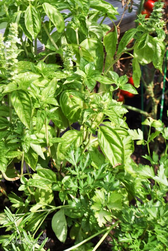 Summer Garden Pasta by Mediterranean Baby-2