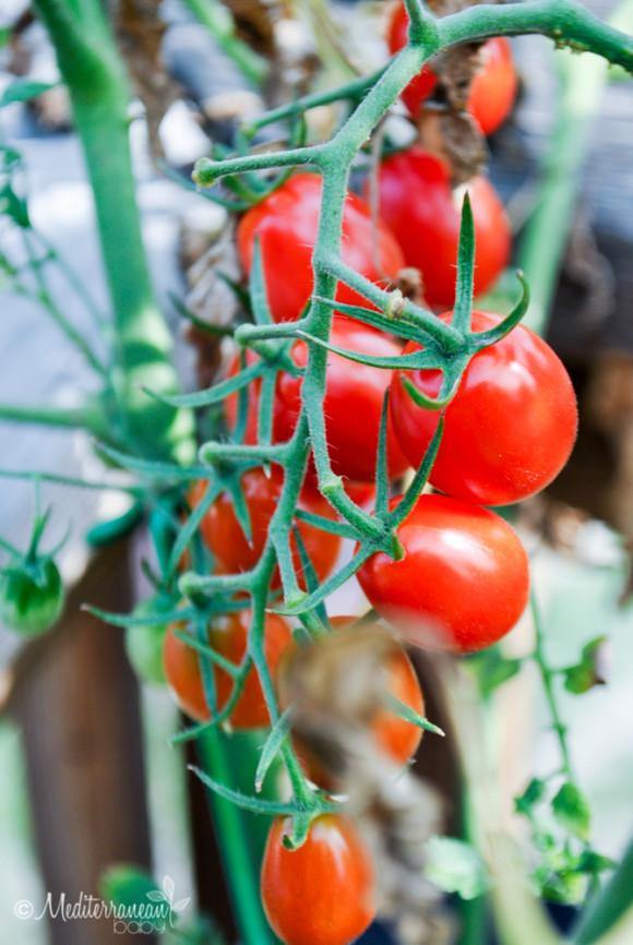 Summer Garden Pasta by Mediterranean Baby