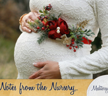 Notes-from-the-Nursery-2nd-trimester