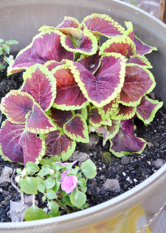 Summer Garden Mediterranean Baby-10