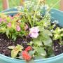 Summer Garden Mediterranean Baby-7