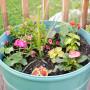 Summer Garden Mediterranean Baby-8